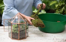 how to plant a terrarium glass terrariums terrarium plants