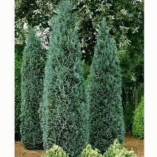 ornamental trees craft landscape