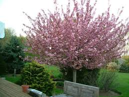 affordable yard trees at cool trees for small backyards front yard