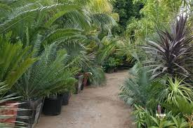 discounted palm trees and cycads