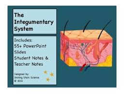 Anatomy And Physiology Class Integumentary System Powerpoint And Notes For High Anatomy