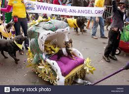 mardi gras dog barkus dog parade mardi gras season new orleans la stock photo