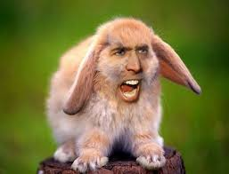 Nicolas Cage Face Meme - hilarious meme of nicholas cage photoshopped as other people