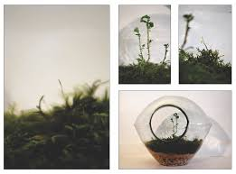 the world u0027s most recently posted photos of mushroom and terrarium