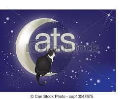 cat on moon beautiful black and white cat sitting on moon