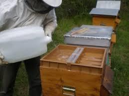 cuisiner les pois cass駸 le nourrissement des abeilles