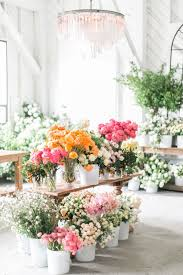 Spring Flower Pictures Best 25 Spring Ideas On Pinterest Spring Flowers Spring Time