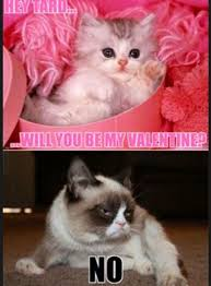 Grumpy Cat Yes Meme - best of aww gc days yes grumpy cat pinterest images picture