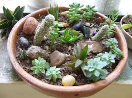 Rock Garden Succulents Time Is For The Birds Mini Succulent Rock Garden