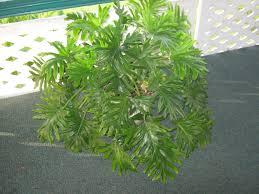 benefits of houseplants garden guy hawaii benefits of houseplants