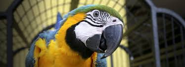 amazon com birds pet supplies cages u0026 accessories toys food
