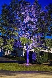 led landscape tree lights led outdoor and landscape lighting tree uplighting color