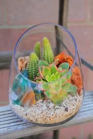 succulent kits mini succulent terrarium w coral terrariums u0026 air plant