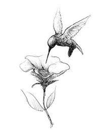 Flower Drawings Black And White - best 25 hummingbird drawing ideas on pinterest bird drawings