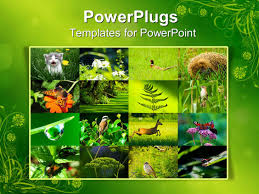 powerpoint template collage of environment with wild animals and