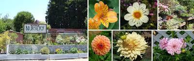 santa cruz native plants pant nursery in santa cruz ca outdoor plants u0026 fruit trees