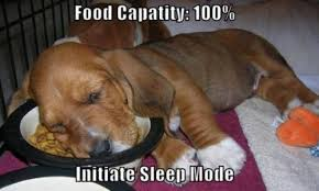 Dog Food Meme - 4 ingredients to avoid when shopping for dog food