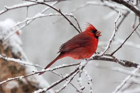 bird photography in the snow