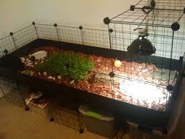 best 25 tortoise table ideas on pinterest tortoise habitat