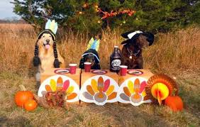 to keep your pets happy and healthy at thanksgiving