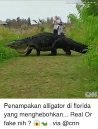 Alligator Meme - 25 best memes about alligators alligators memes