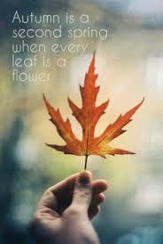 joy fall god u0027s beautiful creation change