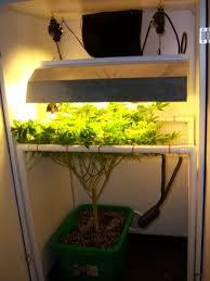 250 watt hid grow lights 250watt hps v s 250watt cfl page 3 grasscity forums
