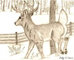 drawing of a buck