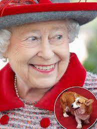 queen elizabeth so verwöhnt sind ihre hunde gala de