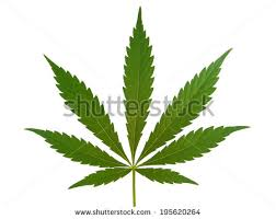 marijuana leaf stock images royalty free images u0026 vectors