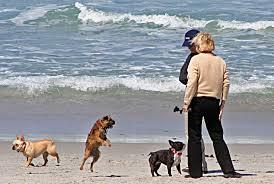 carmel river beach u201cterrible awful don u0027t come u201d once upon a
