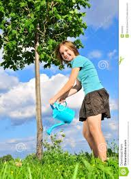 watering a tree stock photography image 6290662