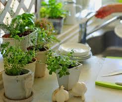 Indoor Fragrant Plants 10 Ways Indoor Plants Can Improve Your Health