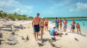 iguana island iguana island picture of sandals emerald bay golf tennis and spa