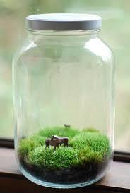 Moss Vase Filler Best 20 Large Terrarium Ideas On Pinterest Water Terrarium