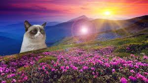 Meme Background - mobile dark backgrounds vector funny humor funny images cat
