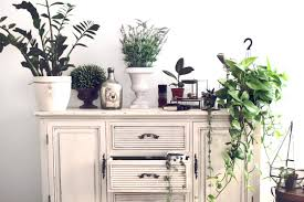 Home Decoration With Plants by All About Houseplants 3 Decorating With Plants Ikea Home