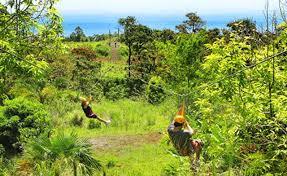 World Botanical Gardens Honolulu Advertiser Deals Hawaii 99 Big Island
