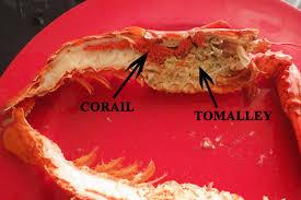 cuisiner homard surgelé homard canadien ou homard français lequel choisir