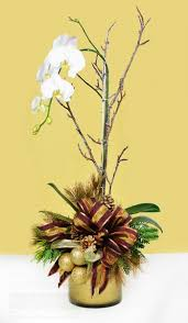 22 best orchid decor images on pinterest orchid plants plants