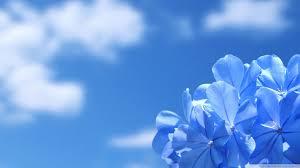 blue flowers blue flowers 4k hd desktop wallpaper for 4k ultra hd tv wide