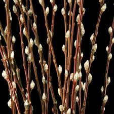 willow decorative branches