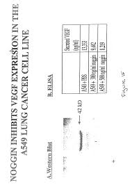 patent us20020159986 bone morphogenetic protein 2 in the