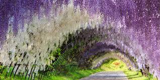 Flowers Flowers Everywhere Springtime Around The World Visual