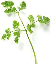 herb farm u0026 fork society herbs 101