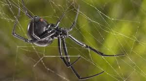 the ten creepiest spiders of north america u2013 cool green science
