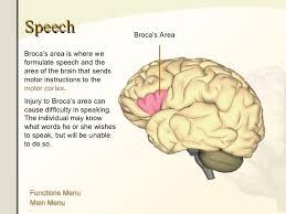 Human Anatomy Words The Human Brain Anatomy