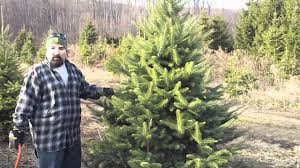 cutting down a christmas tree with the yankee cowboy youtube
