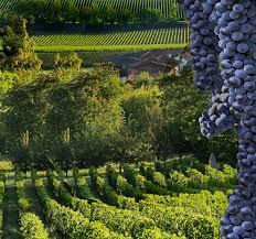 best 25 wine chateau ideas best 25 bordeaux wine tours ideas on bordeaux