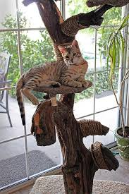 best 25 cat trees ideas on diy cat toys cat